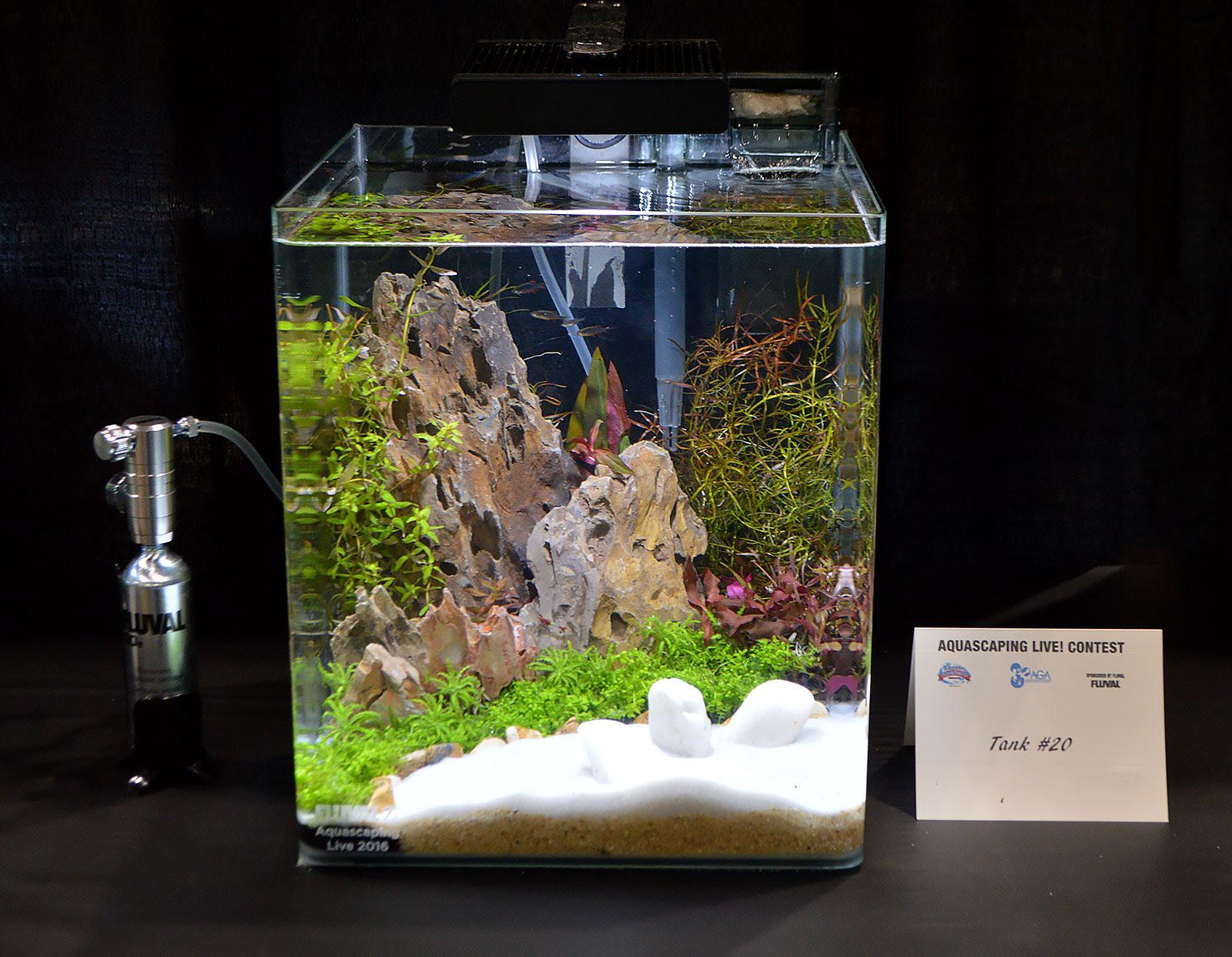 Aquascape Ideas Small Tank Aquascape