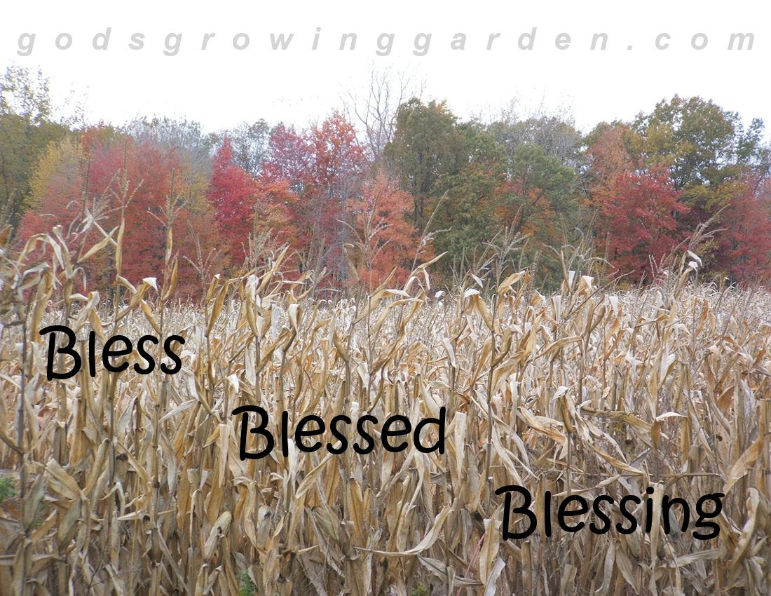 by Angie Ouellette-Tower for http://www.godsgrowinggarden.com/ photo SundayBless_zpsbdhauamy.jpg