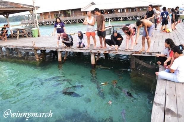 penangkaran ikan hiu