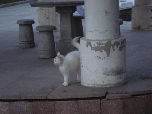 Cats in Shenyang, China _ 0151