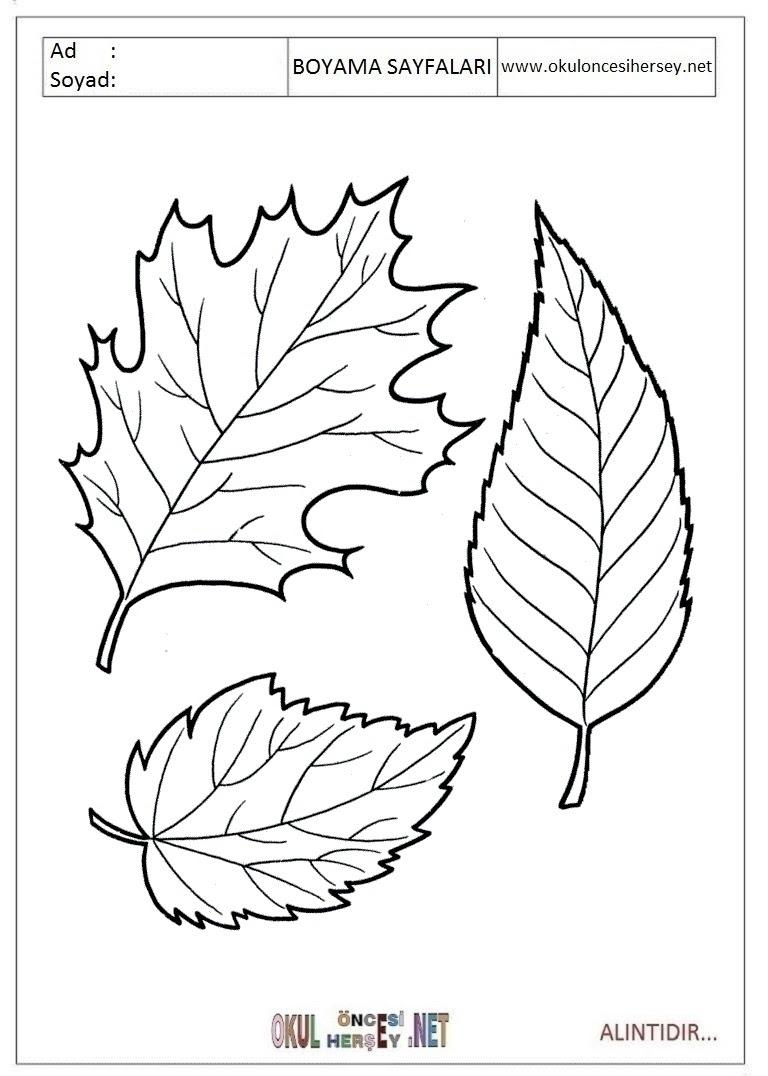 Yaprak Boyama Sayfaları