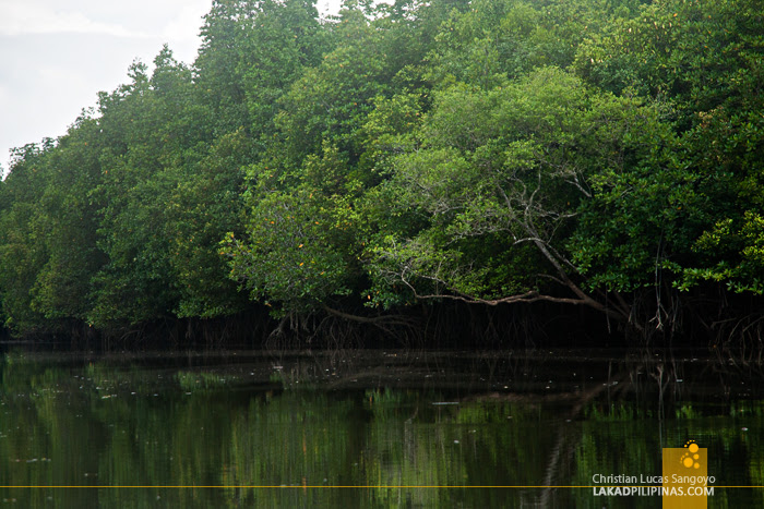 Mangroves at Thailand's Phang Nga Bay