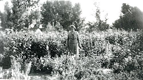 3457 Martha in flower garden