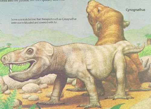 _Dinosaurs and Other Archosaurs_ p.13