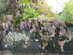 wisteria and graffiti by Teckelcar