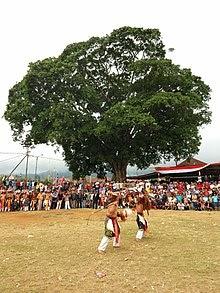 Galangputrakr Caci Tari Dan Permainan Tradisional Di Flores Nusa Tenggara Timur Indonesia