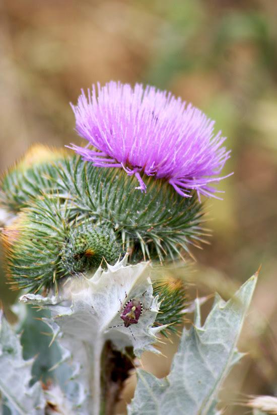 fioritura 16