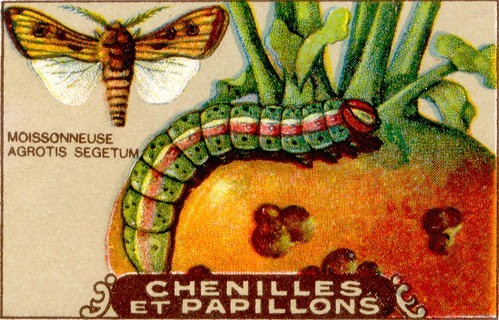 chenille 8