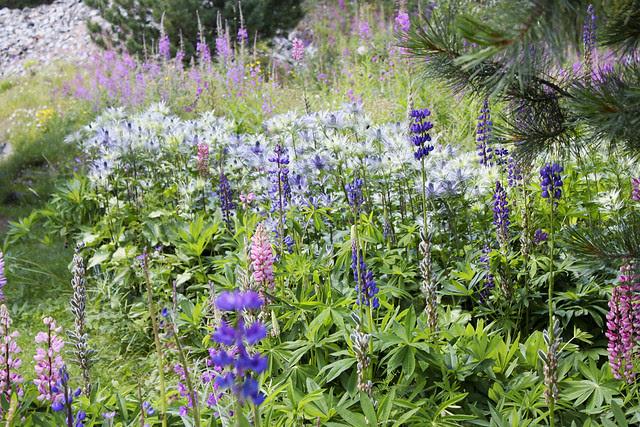 Blumenwiese in Spinas