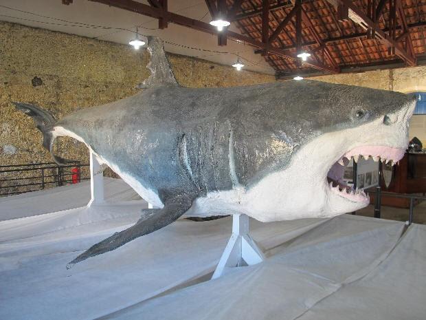 Animal taxidermizado está exposto em museu de Cananéia, SP (Foto: Anna Gabriela Ribeiro/G1)