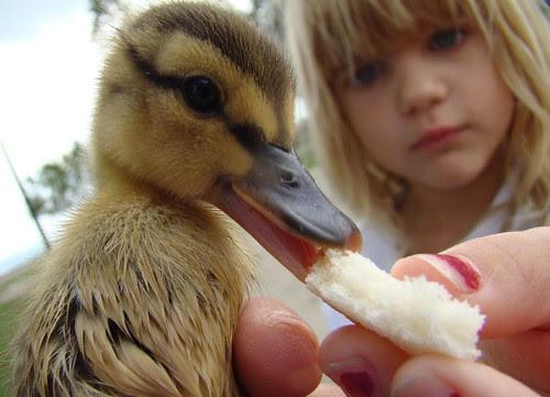 Girls feed duckling
