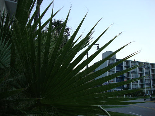 palm frond?