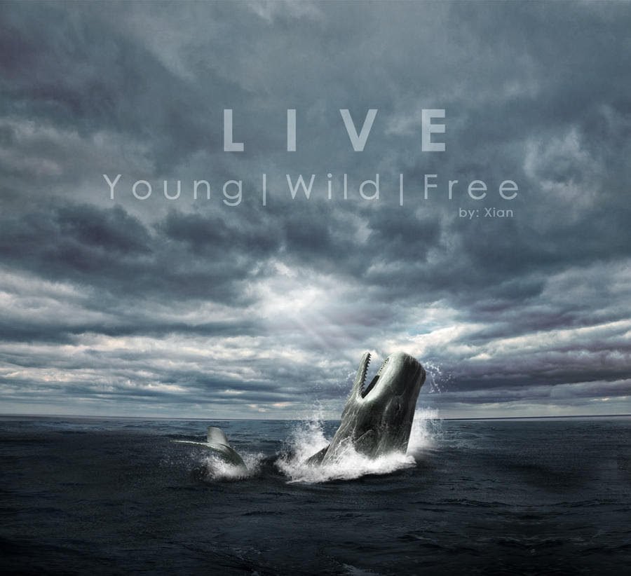 Animal World Wallpaper Live Young Wild Free By Xianliu On