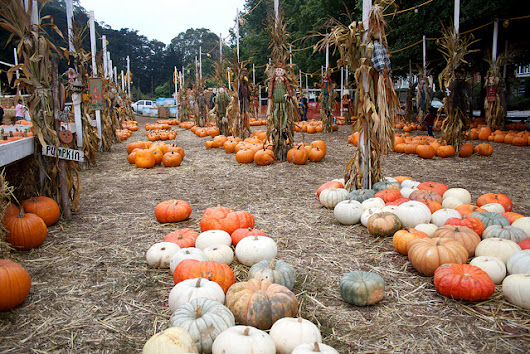 Don't Miss These DFW Pumpkin Patches - DFW Living on the Cheap