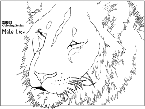 male lion head coloring page  free printable coloring pages