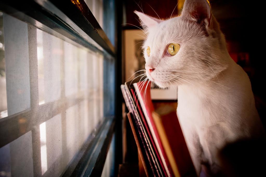 目中無人的貓