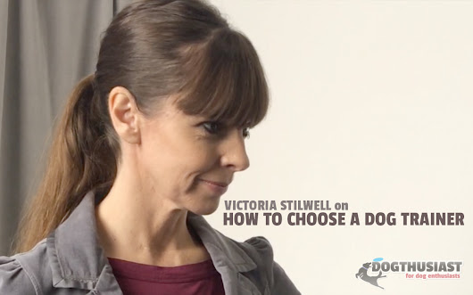 How to find a good dog trainer or dog training classes: Victoria Stilwell exclusive video