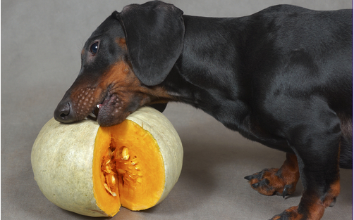 10 Fruits & Vegetables That Dogs Absolutely Love!