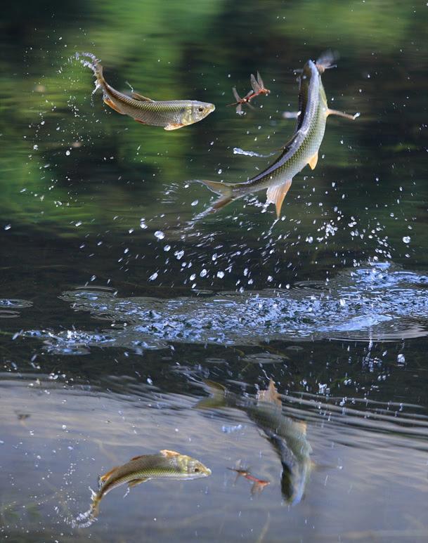 kri's hunting by Bak GiSeok