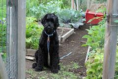 skippy in the garden 6