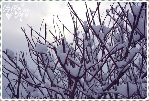 http://i402.photobucket.com/albums/pp103/Sushiina/Daily/snowland.jpg