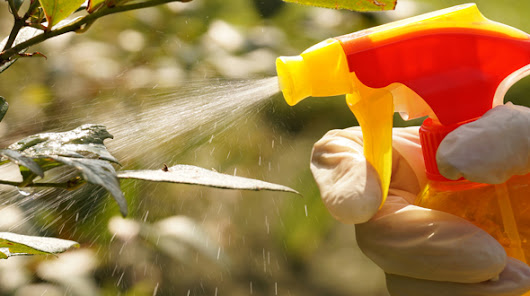 Insecticidal Soap Recipe to Control Tree Pests