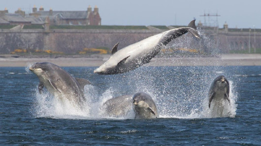 Magic moment with bottlenose dolphins worth the wait for photographer