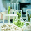 Exploring Microalgae for Sustainable Nutrition | SelectScience