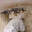 Mold Abatement Cost