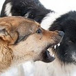 Dog Aggression: Causes & Treatment