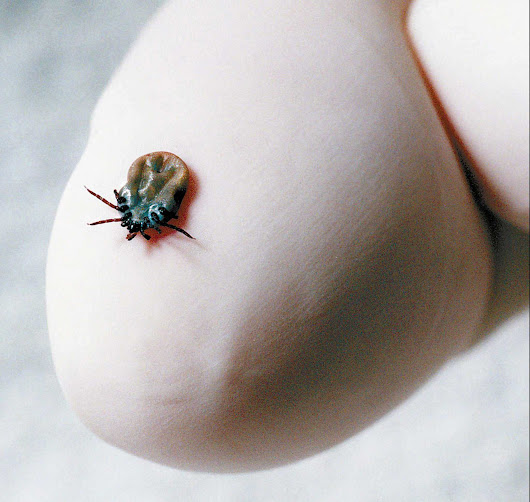 Report: More CT ticks linked to Lyme disease