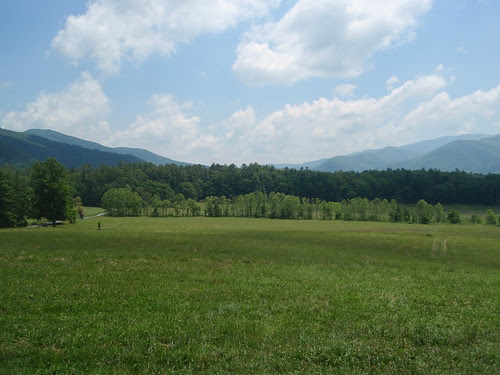 cade's cove meadows (3)
