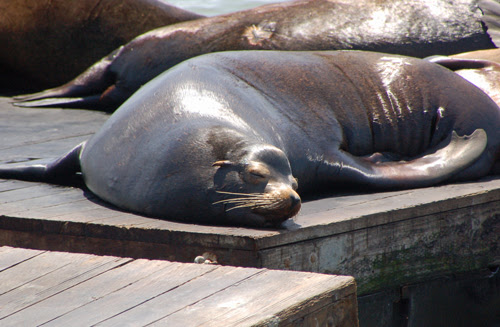 sleeping-sea-lion.jpg