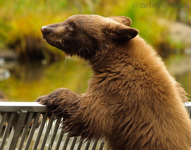 Cub on the fence