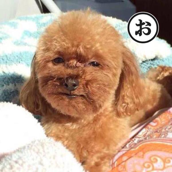 俺はじんめん犬じゃない 犬へのボケ54021878 ボケてbokete