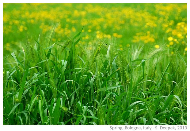 Spring greenery, Bologna, Italy - images by Sunil Deepak, 2013
