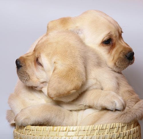 Puppy Hugs love