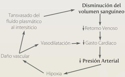 Esquema Shock Hipovolémico, Salud2.0