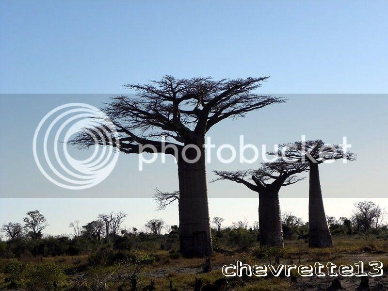 http://i1252.photobucket.com/albums/hh578/chevrette13/Madagascar/DSCN2426Copier_zps21b1aca2.jpg