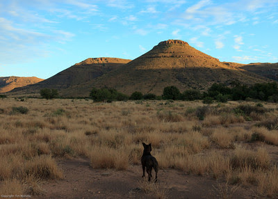Taaiboschfontein Guest Farm early morning with Staffie