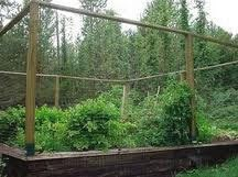 Electric fence build electric deer fence - How to keep deer out of garden home remedies ...