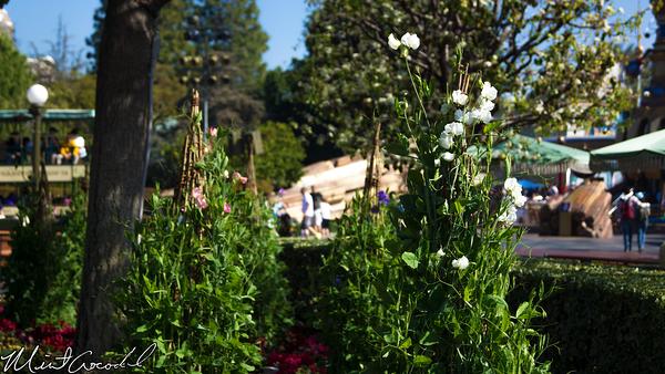 Disneyland Resort, Disneyland, Hub, Walt, Mickey, Statue, Partners, Tulip, Flower