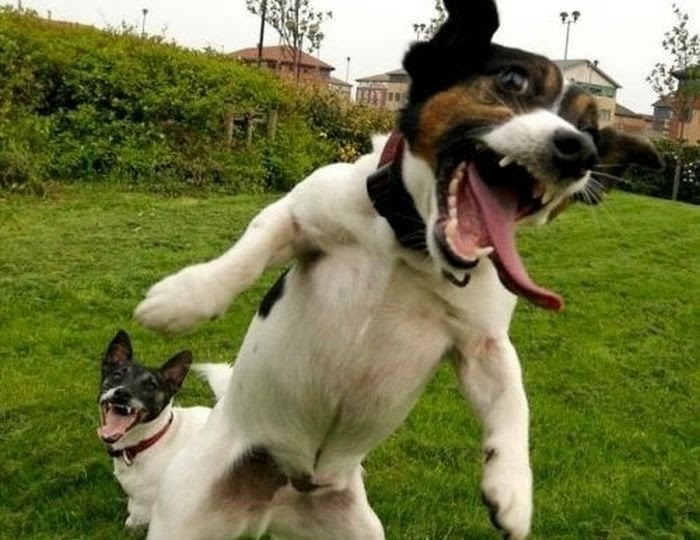 happiest_dogs_on_the_internet_30 (700x540, 152Kb)