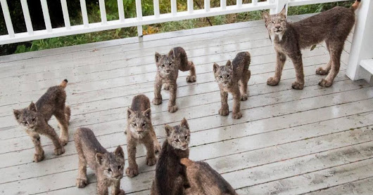 This Man Woke Up To A Strange Noise, Then He Saw This On His Porch (16 Pics)