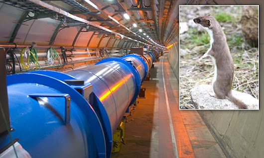The Large Hadron Collider has shut down...because of a WEASEL: