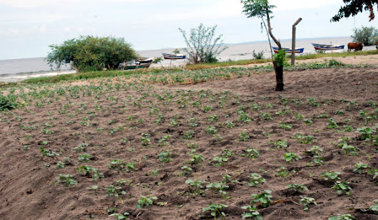 In Tanzania, unemployed youths turn to agriculture