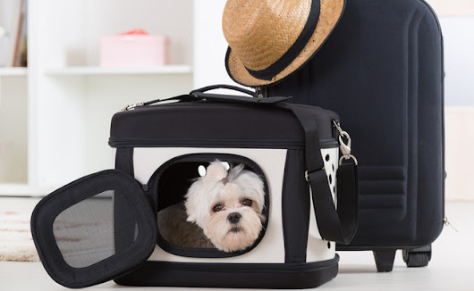 Make Moving Less Stressful For Pets | Care2 Healthy Living