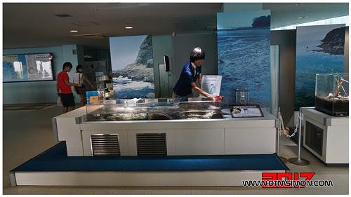 新江之島水族館41.jpg