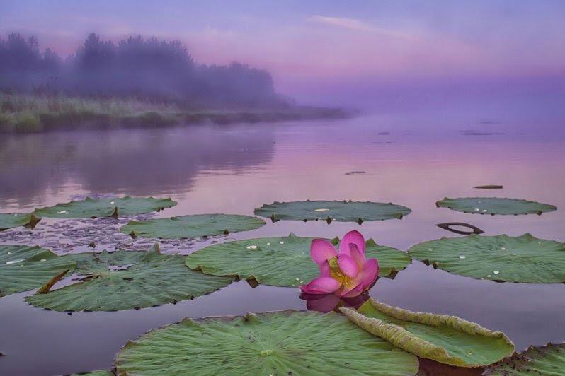 Озеро Лотосов, село Галкино, Хабаровский край озеро, природа, россия