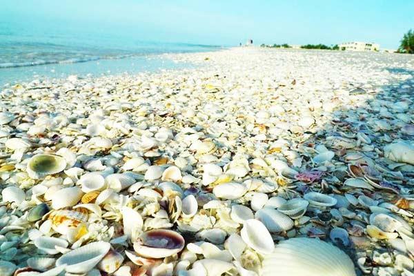 http://perierga.gr/wp-content/uploads/2012/08/shellbeach4.jpg